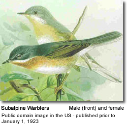Male and Female Subalpine Warblers