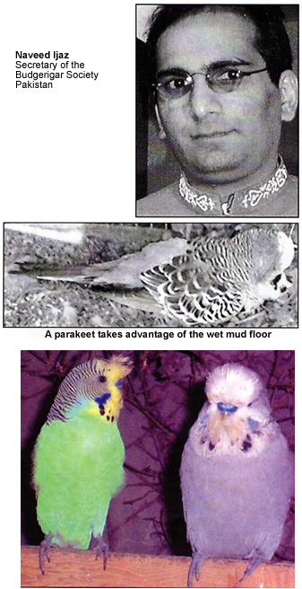 Naveed Ijaz - Secretary of the Budgerigar Society Pakistan