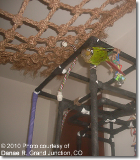 Bird Play Area
