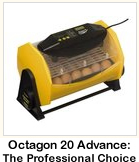 Octagon 20 Advance