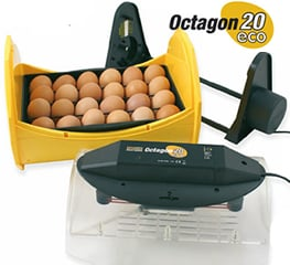 Octagon 20 Eco