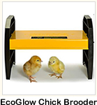 EcoGlow Chick Brooders