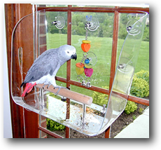 Wingdow Seat - Large - with African Grey