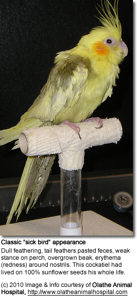 Causes of Sudden Death in Pet Birds | Beauty of Birds
