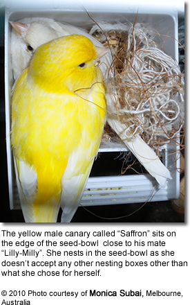 Nesting Canaries