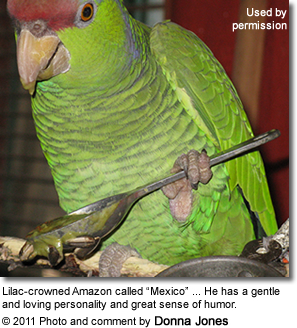"Lilac-crowned Amazon called ""Mexico"