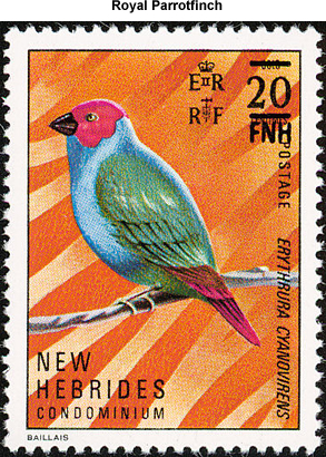 Royal Parrotfinch