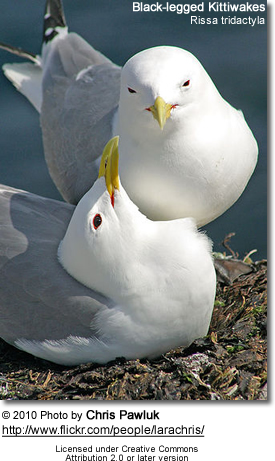 Black-legged