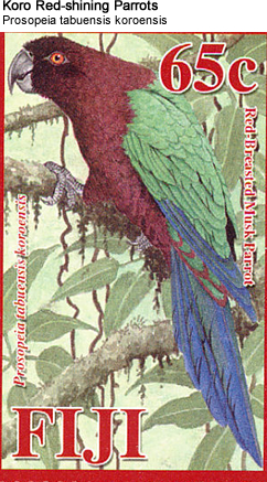 Koro Red-shining Parrots: Species: Scientific: Prosopeia tabuensis koroensis