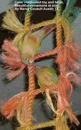 Cinnamon Yellow-sided Greencheek Conures