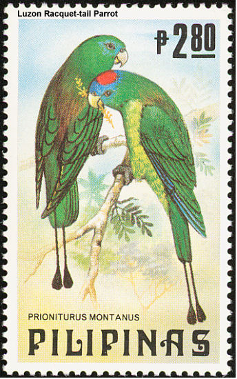 Luzon Racket-tailed Parrots