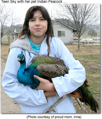 Indian Peacock with her owner Sky