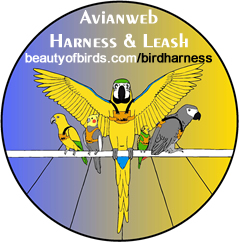 The New Avianweb Harness