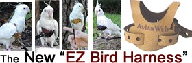 Our new Patented Bird Harness!