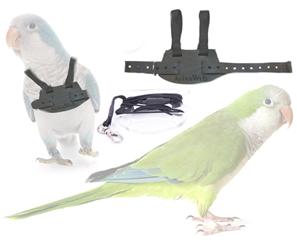 Quaker Parrot with Avianweb's EZ Bird Harness