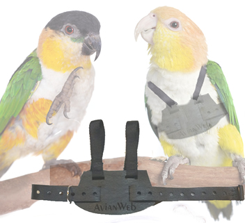 Caique Parrots wearing the EZ Bird Harness