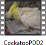 Cockatoo PDD