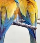Bee-eaters image 2