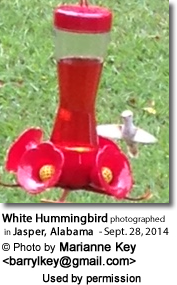 Alabama White Hummingbird